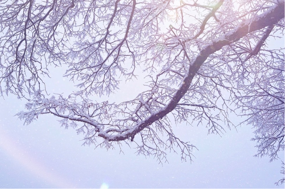 A tree branch covered in snow. Photo by Mihaela Limberea