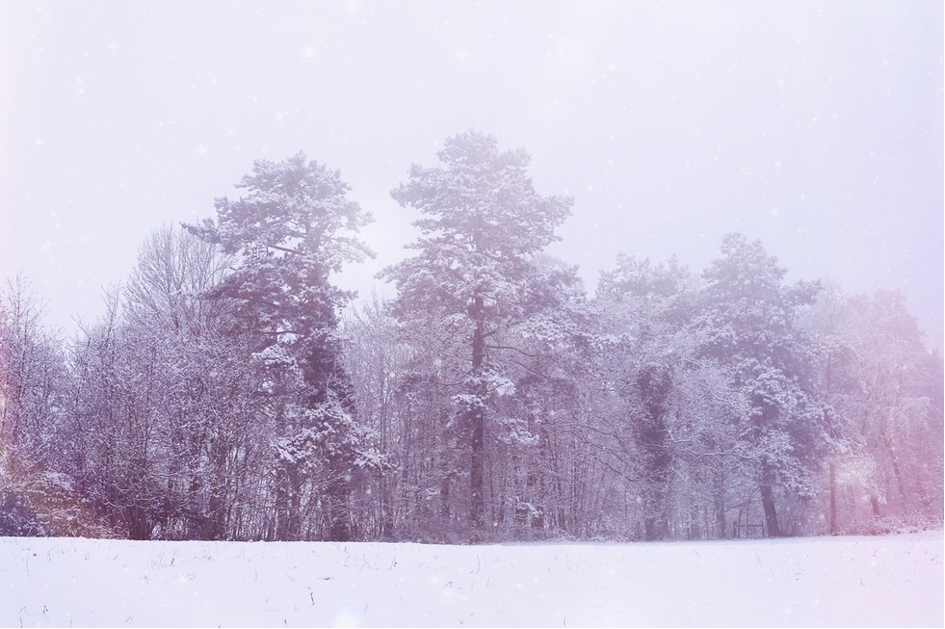 Trees covered in snow. Photo by Mihaela Limberea