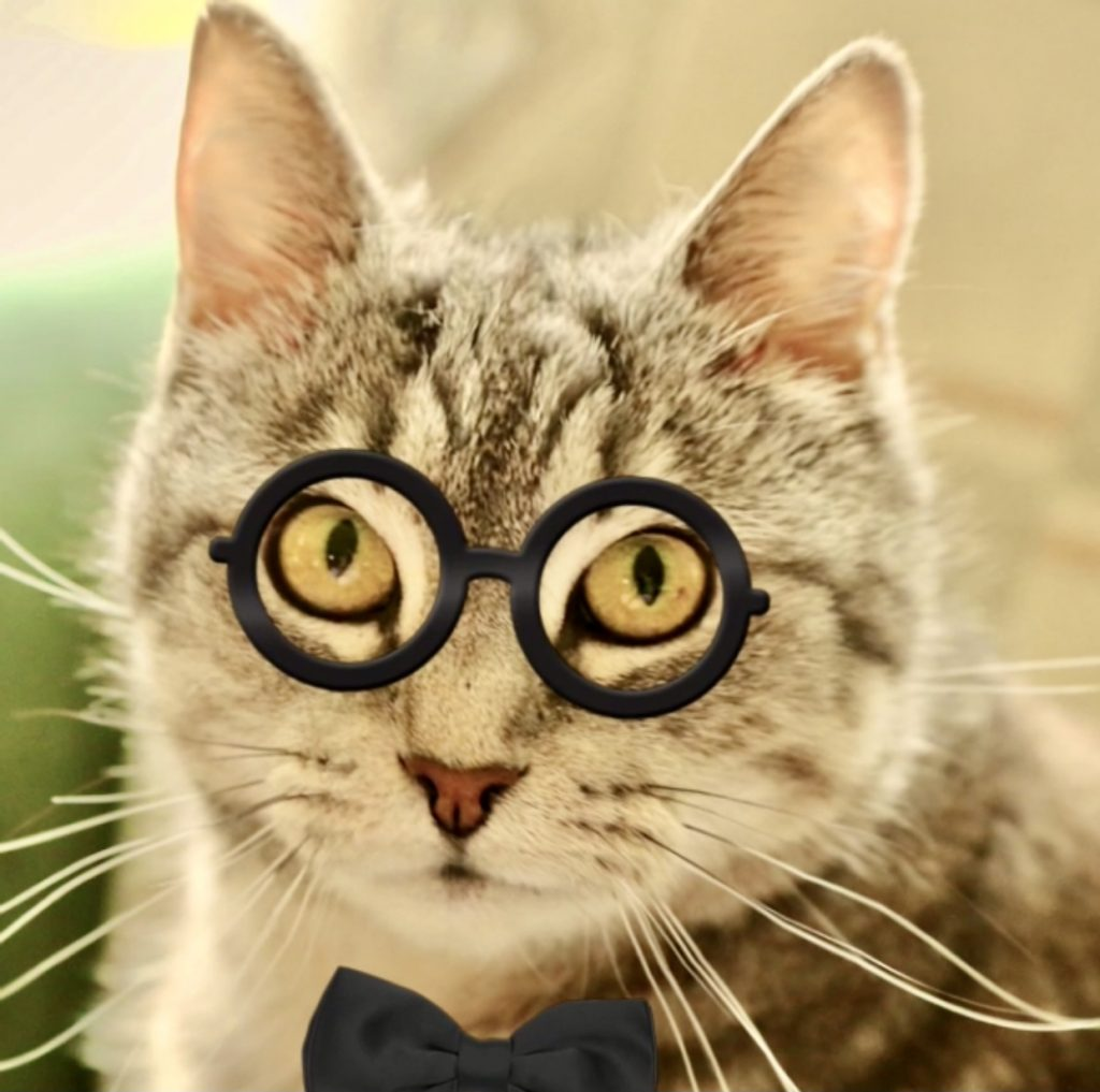 Cat with tie and glasses