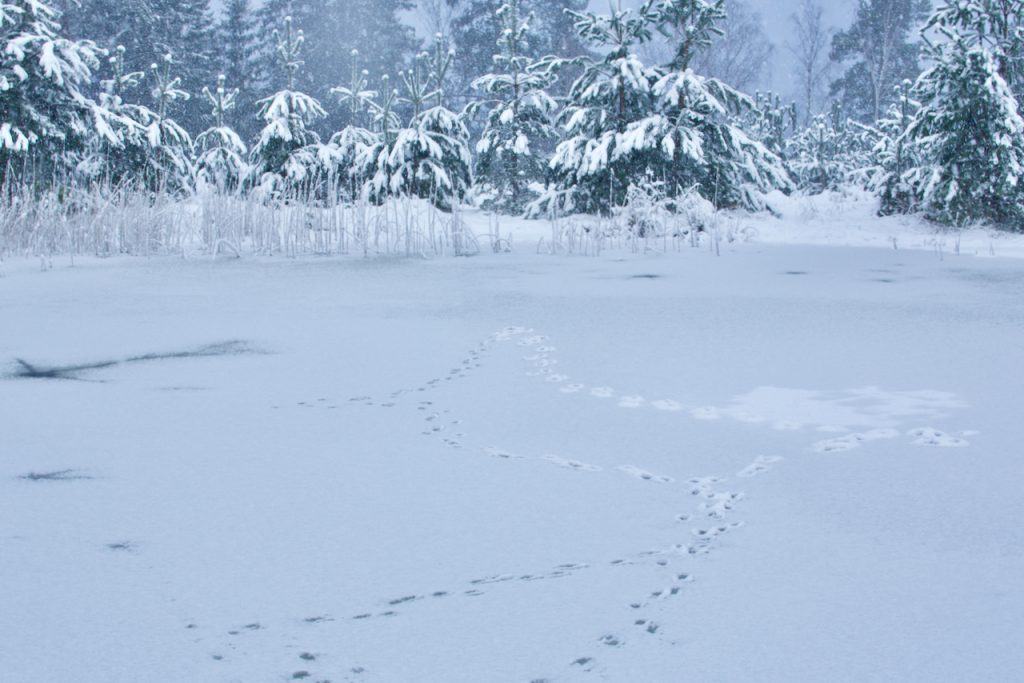 Frozen lake and snowy trees. Photo by Mihaela Limberea