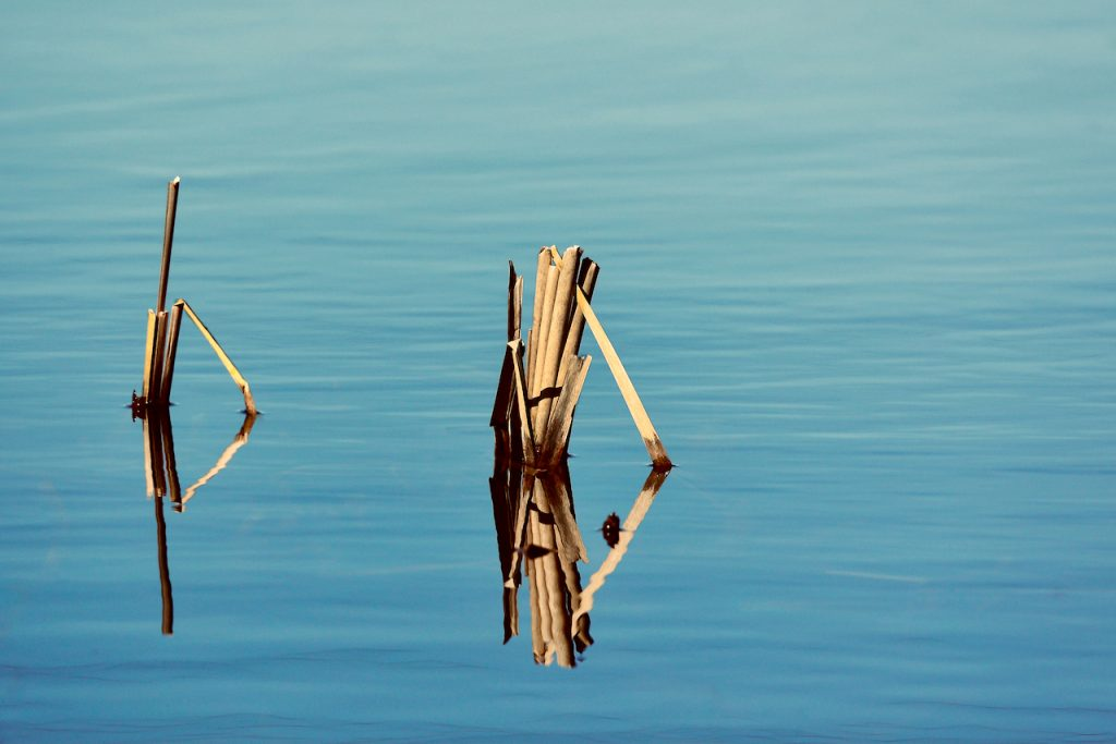 Reflection of reeds in the lake water. Photo by Mihaela Limberea