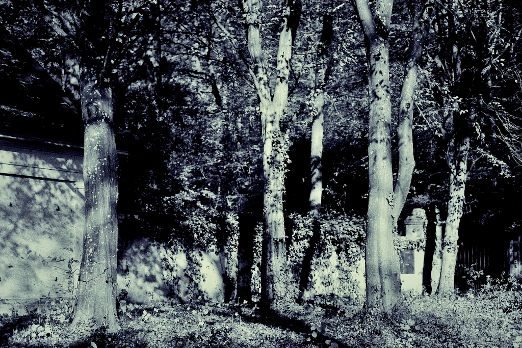 Trees and an old stone wall in black and white. Photo by Mihaela Limberea.