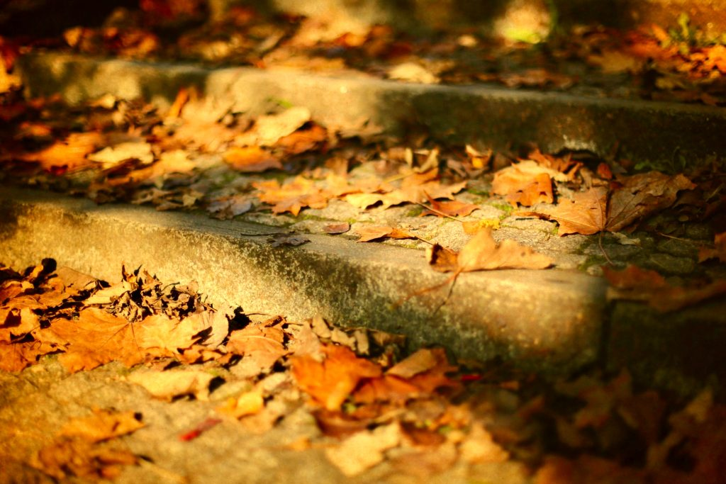 Autumn leaves on stone stairs.