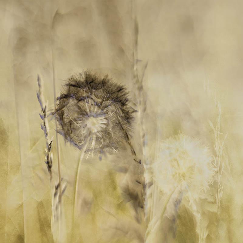 Meadow Flowers (2)