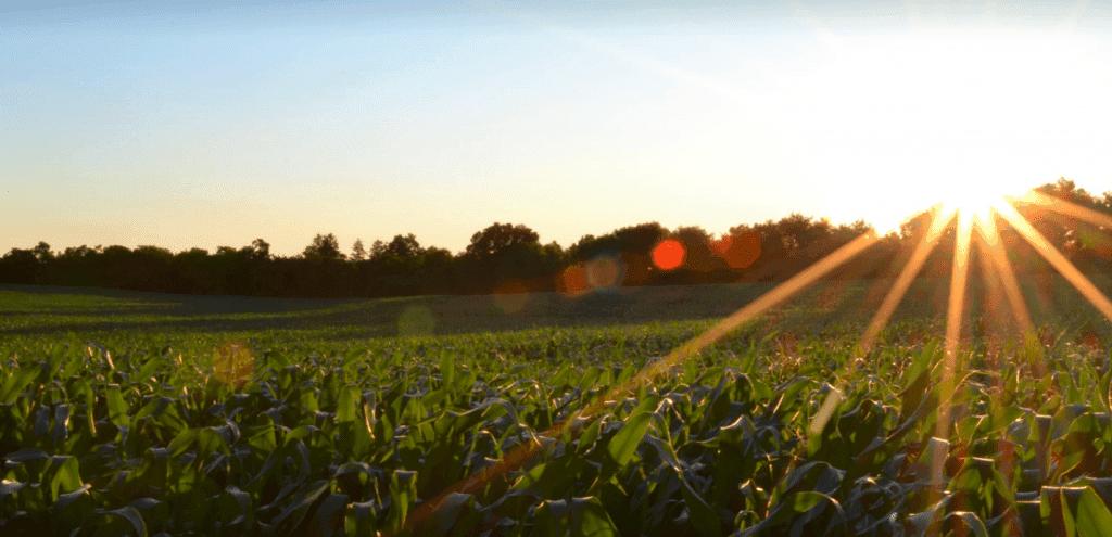 Größte Chemie M&A Deals Fusion Praxair Linde Bayer Monsanto