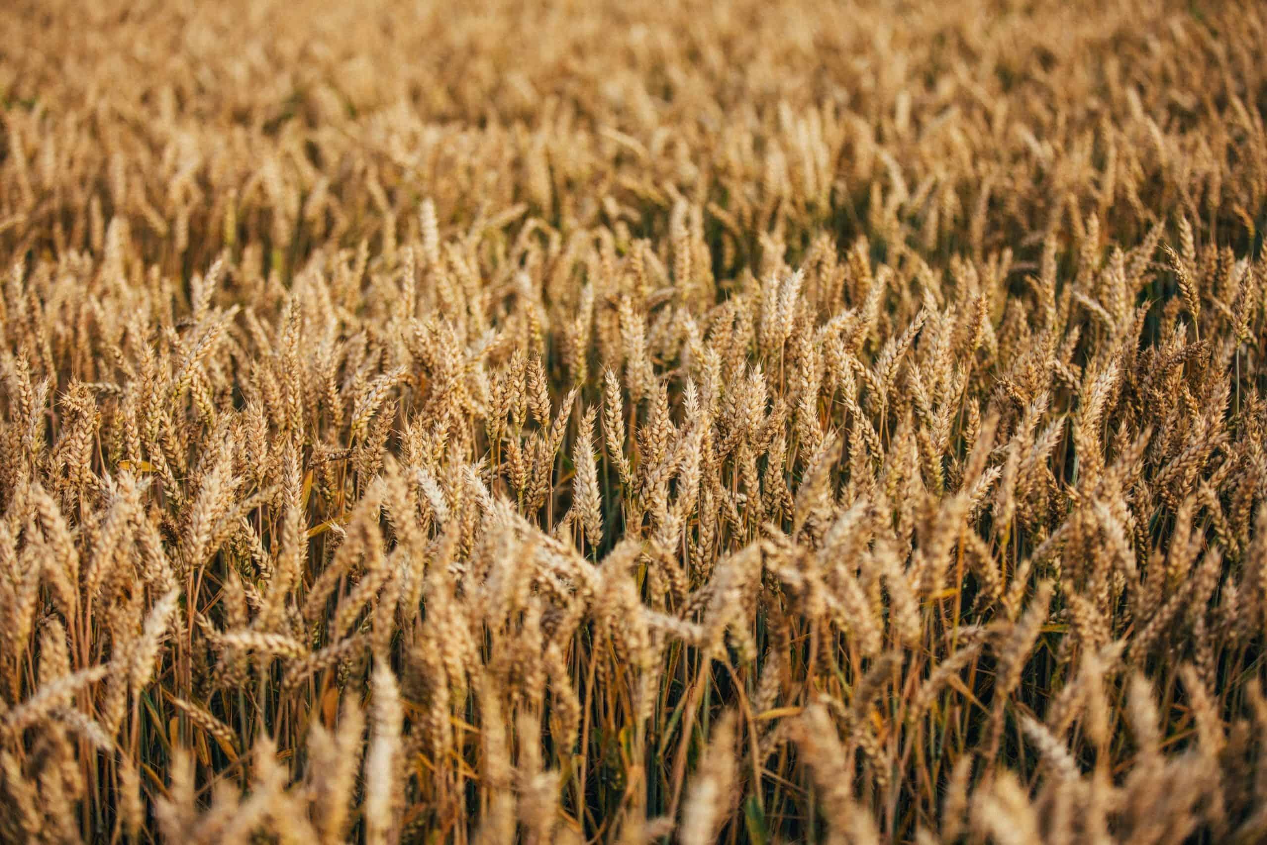 Größtes Agrar-Handelsunternehmen in Deutschland: BayWa AG