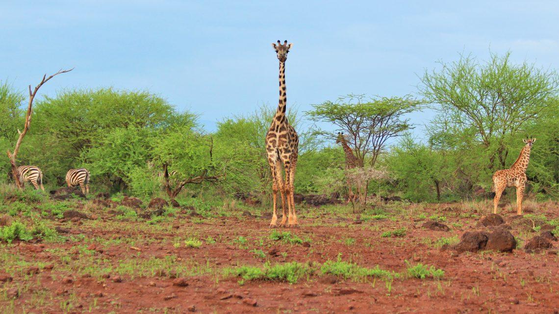 Turen til Kenya