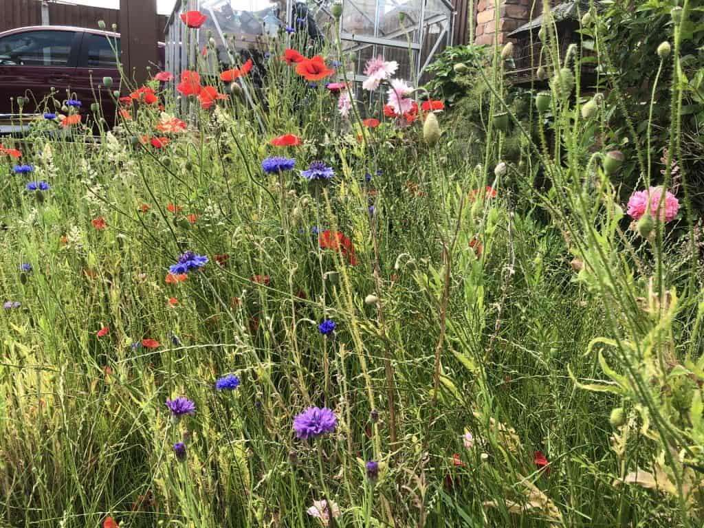 Wild cornflowers and poppies