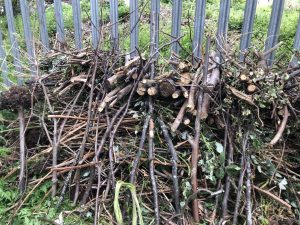 Log-pile in the wood