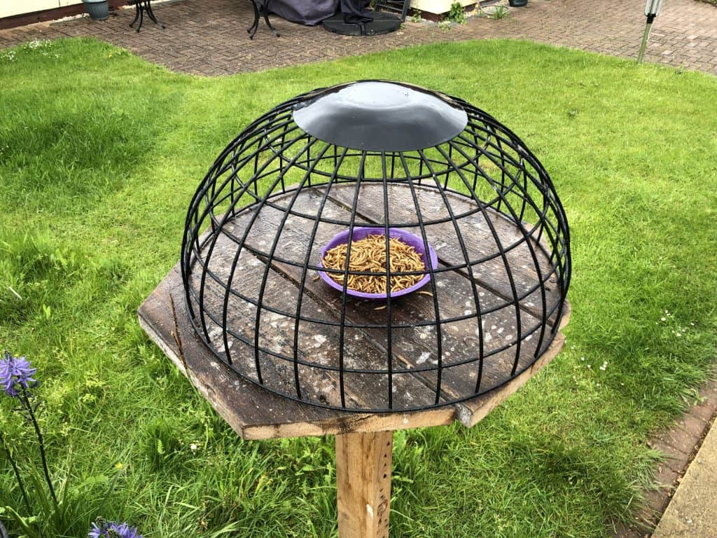 Worm tray in domed cage