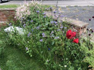 Wild-flower patch