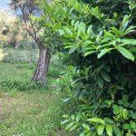 Olivgården