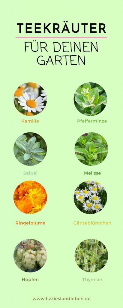 Teekräuter für deinen Garten