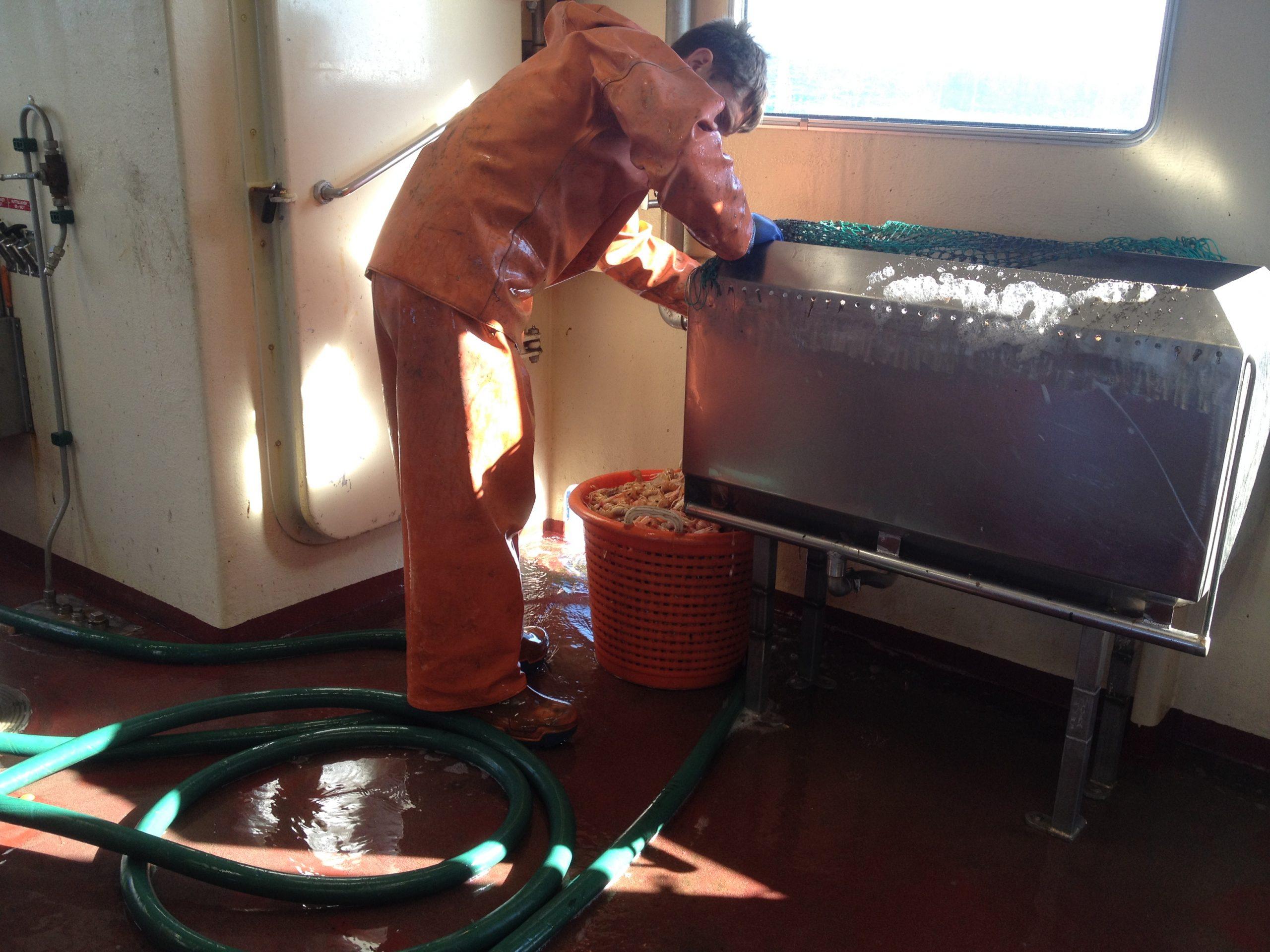 Tvätt av fångst