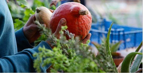 Halle Tropisme : lancement du marché paysan du jeudi