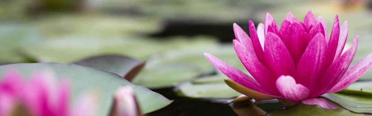 Lotus Helhetsterapi