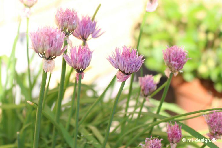Purløg m/blomst