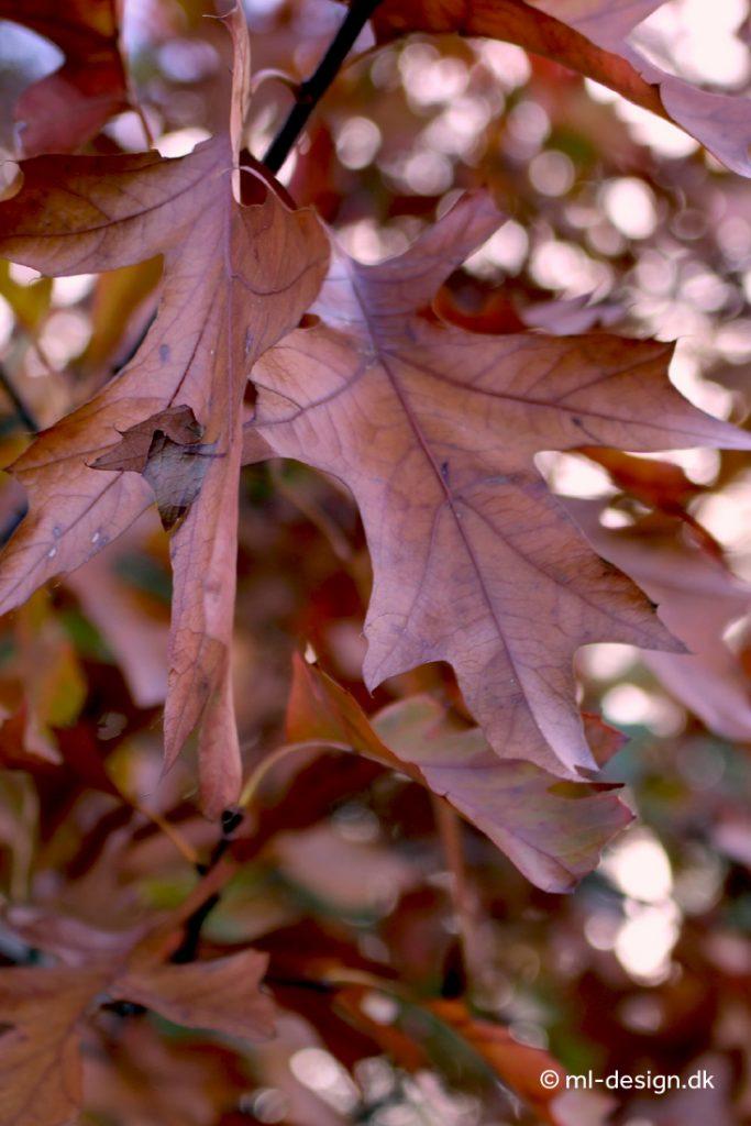 Natur blade efterår