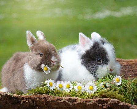 rabbits, easter, rabbit-2174679.jpg