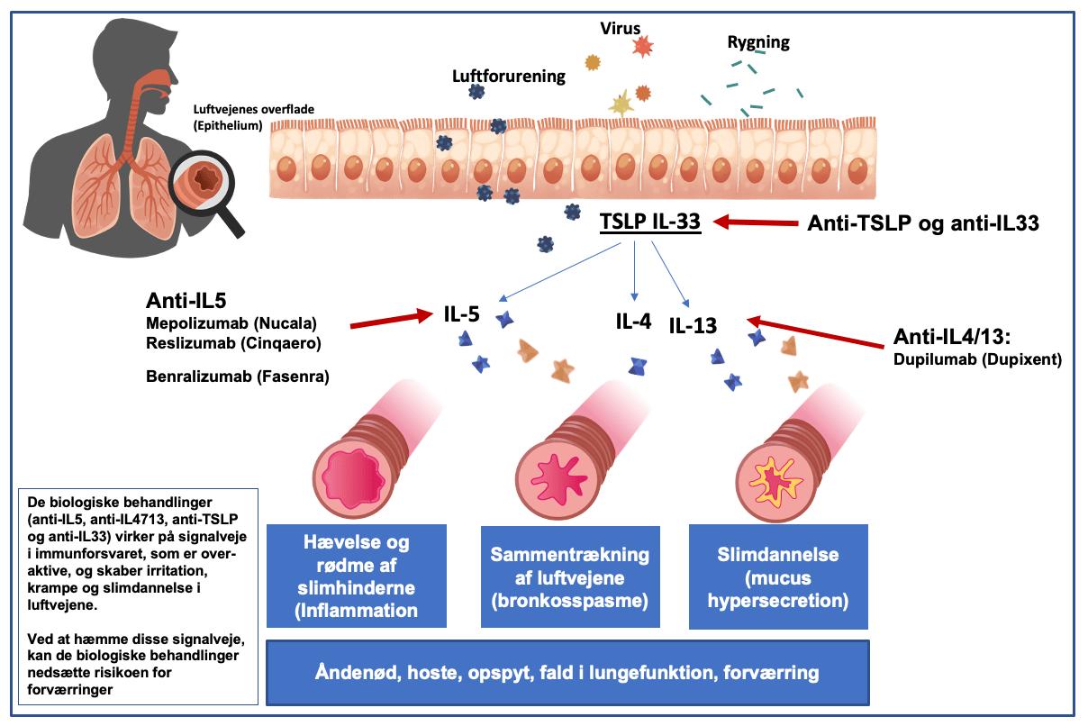 Biologisk behandling til KOL