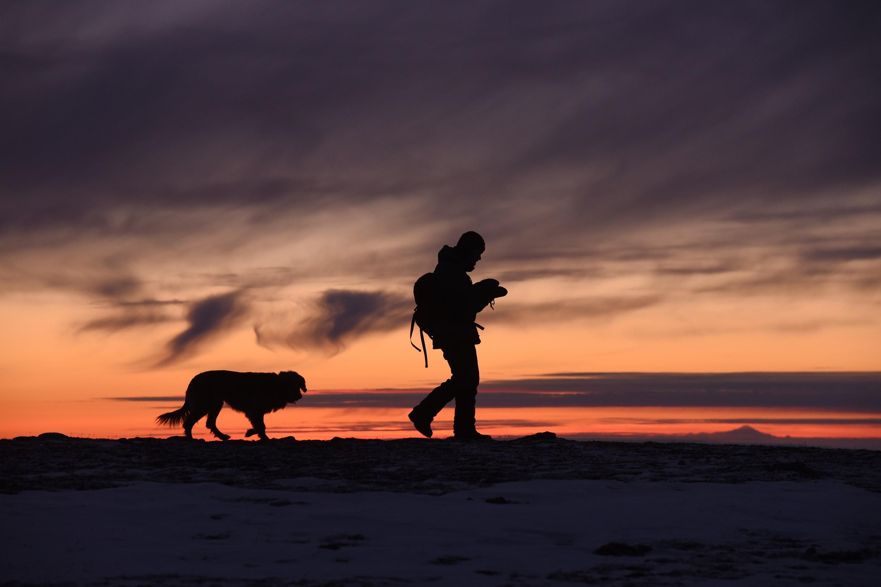 vandra med hund