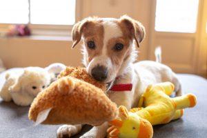 Hundeleker. Bildet viser hund med kosedyr