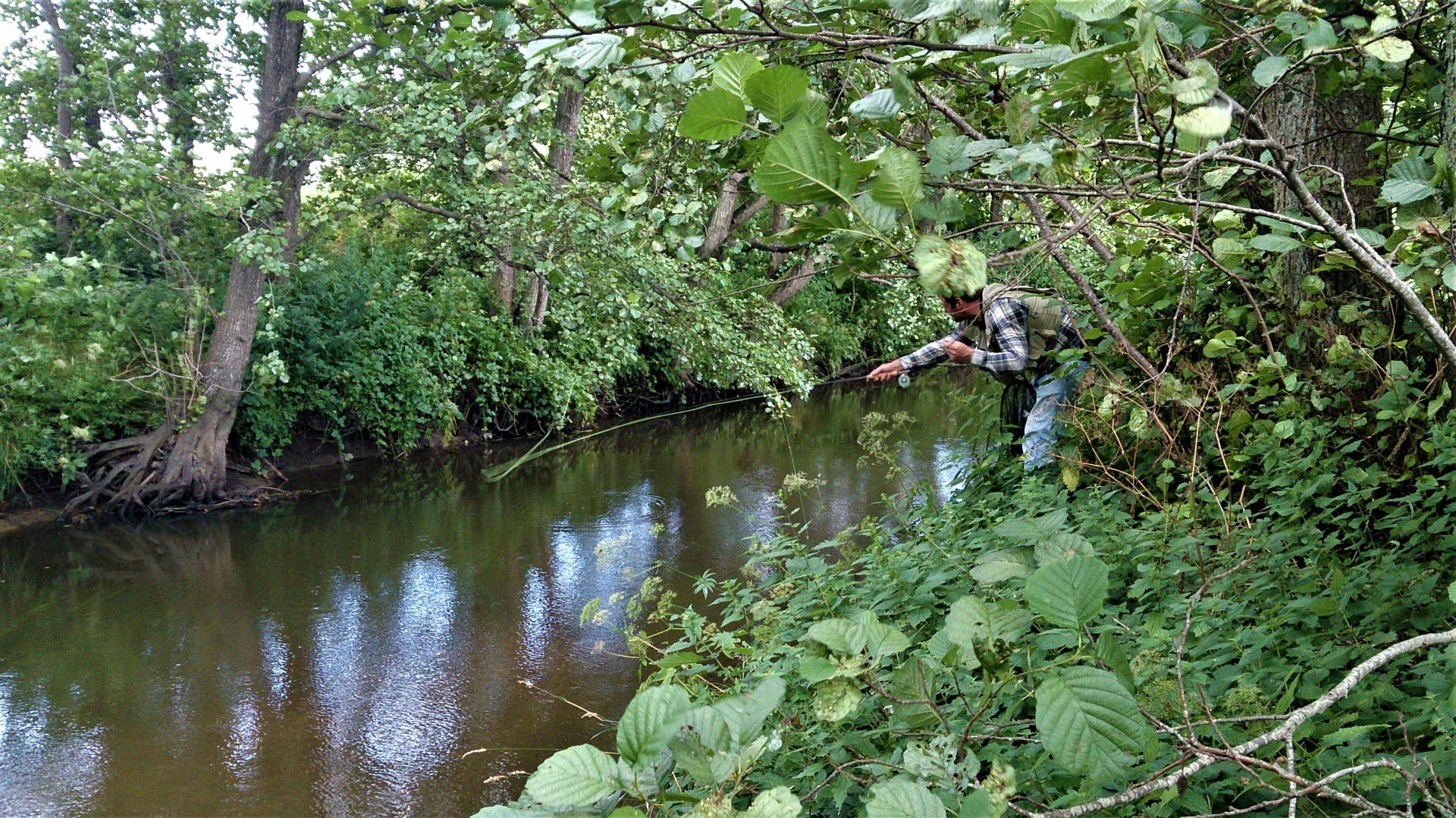 Fluefiskeri med tørflue efter bækørreder.