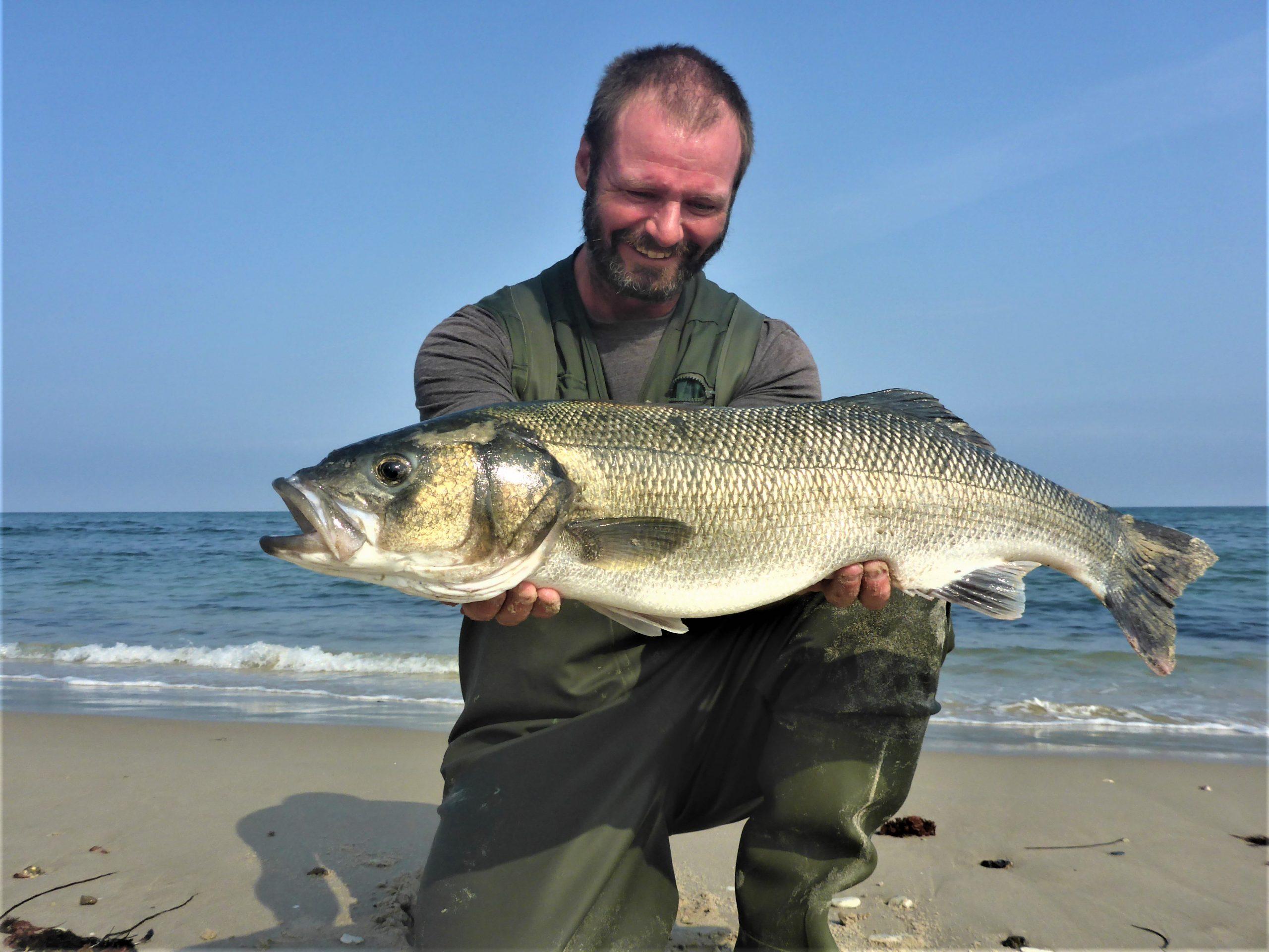 Havbarsfiskeri med blink, er simpelt og nemt.