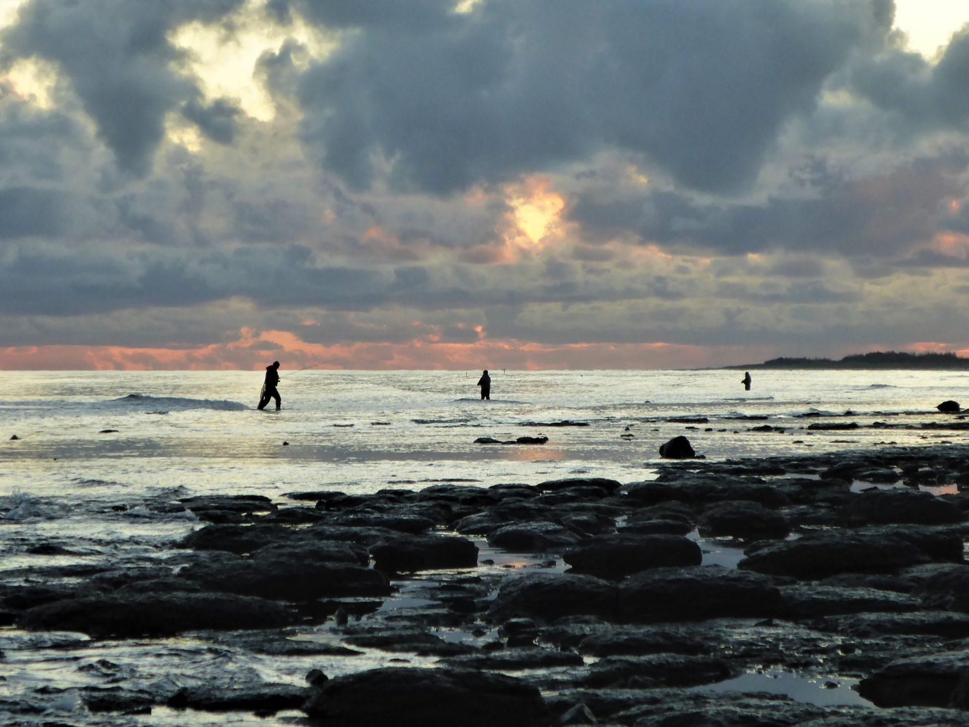 Kystfiskeri efter havørred.
