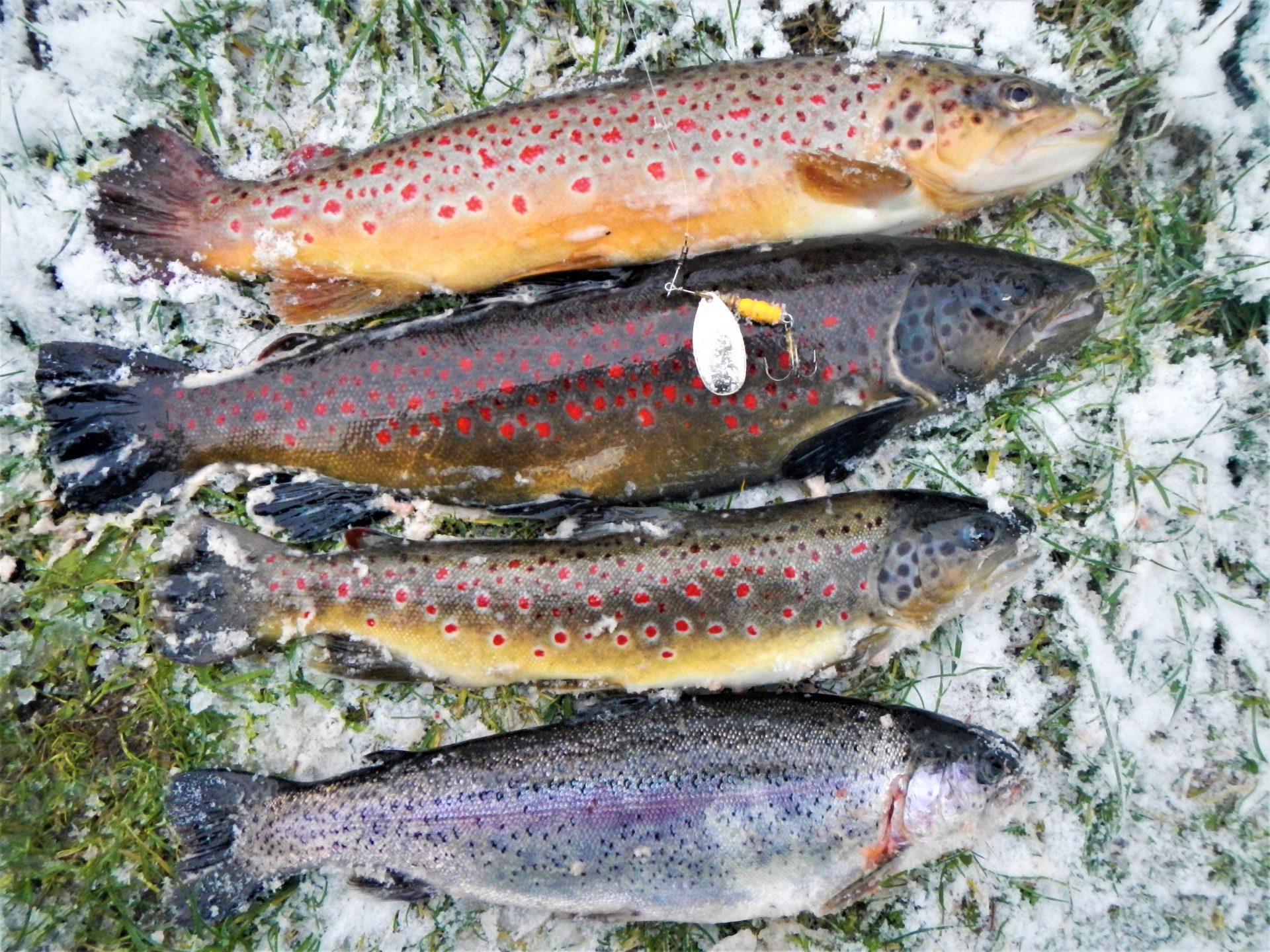 Put and takefiskeri om vinteren