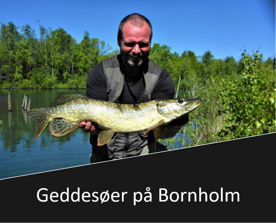 Geddesøer på Bornholm
