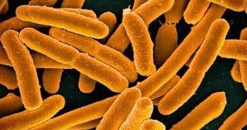[MC] Magazine Chic - Bactéries
