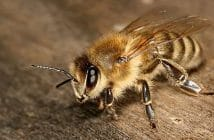 [MC] Magazine Chic - L'importance des abeilles