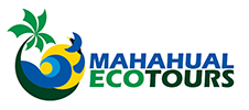 Mahahual Ecotours - Where the only connection is nature.
