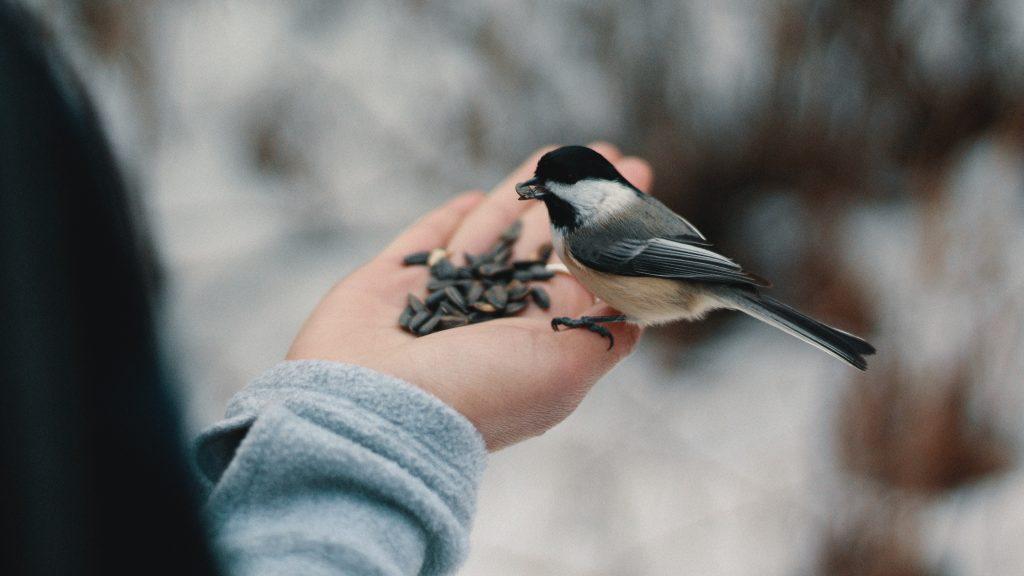 kin living - fugl i hånd