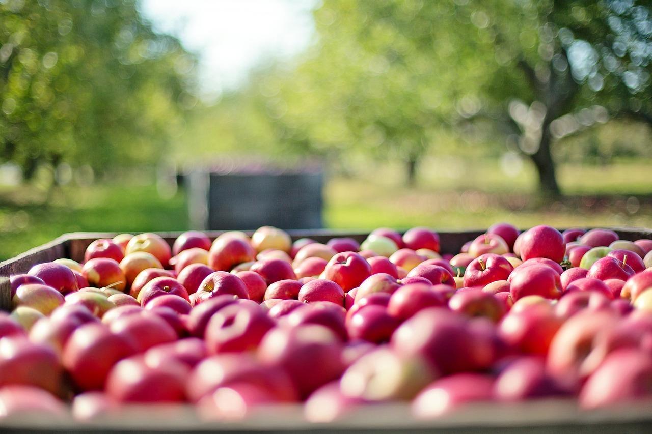 Äpple i låda