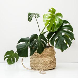 manipura living kurv til plante