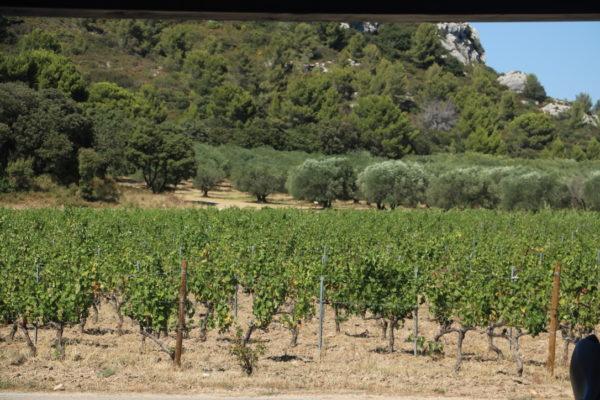 manipura living rødvinseddike fra vinmarker chateau d'estoublon