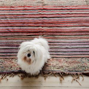 Charlie på Beni MGuild vintage tæppe