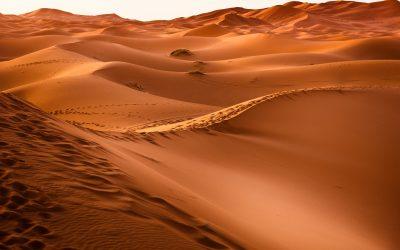 La faune du désert marocain