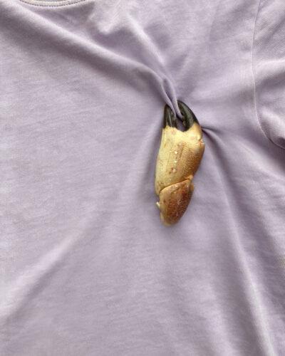 Hannah Bourn Pagarus Pin, 2020, pin; Pagarus crab claw, gold-plated silver pin back, magnets 70 x 30 mm