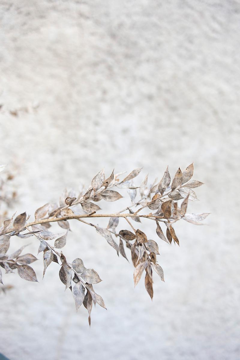 Photographie déco de fleurs séchées réalisée par la Visual Storyteller Mathilde Troussard