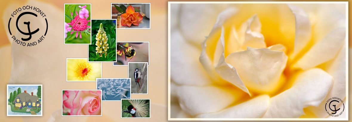 Photographic cards with flowers and birds