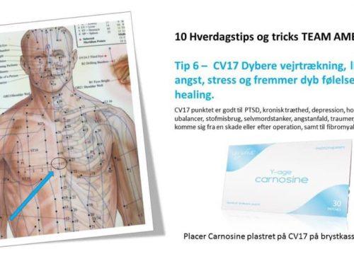 CV17 – akupunktur – stress og angst punkt – carnosine