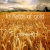 In fields of gold- in ontwerp