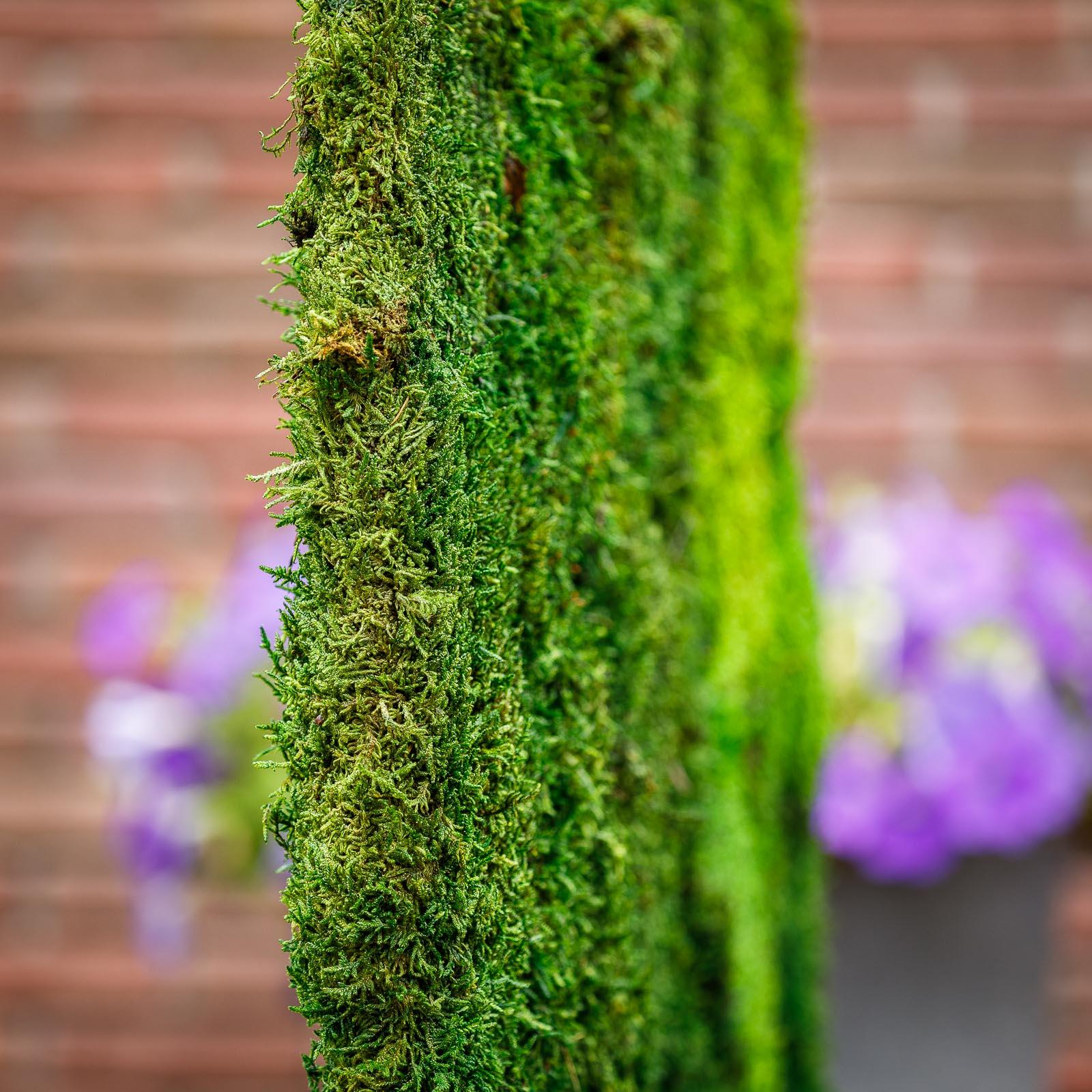 Roomdivider maar dan met duurzaam natuurlijk mos bekleed dat géén onderhoud meer vergt