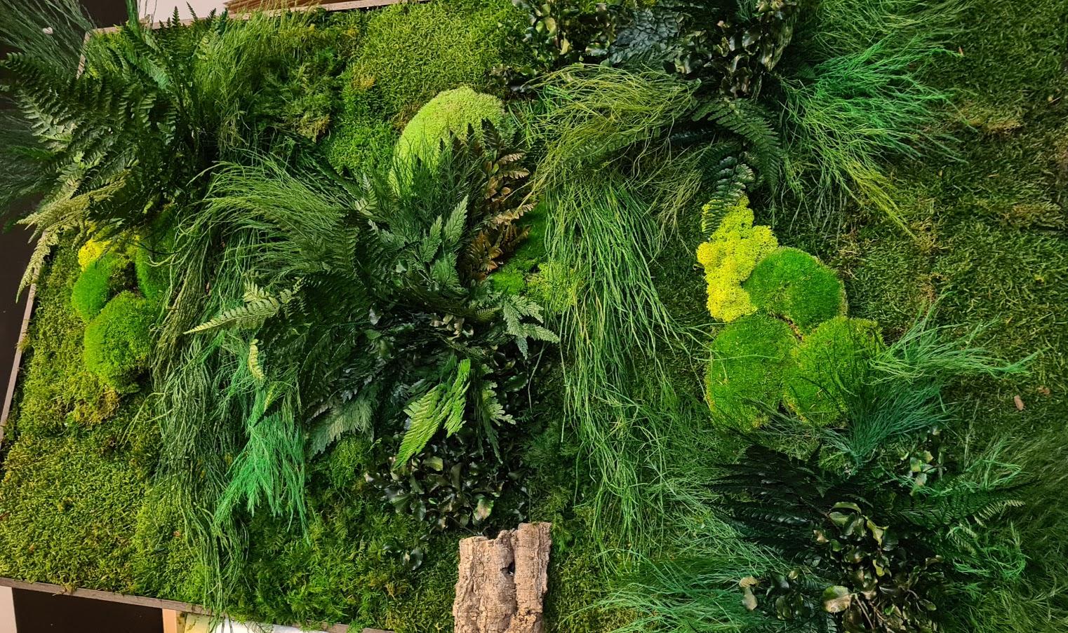 Jungle schilderij van mos en echte planten en toch onderhoudsvrij