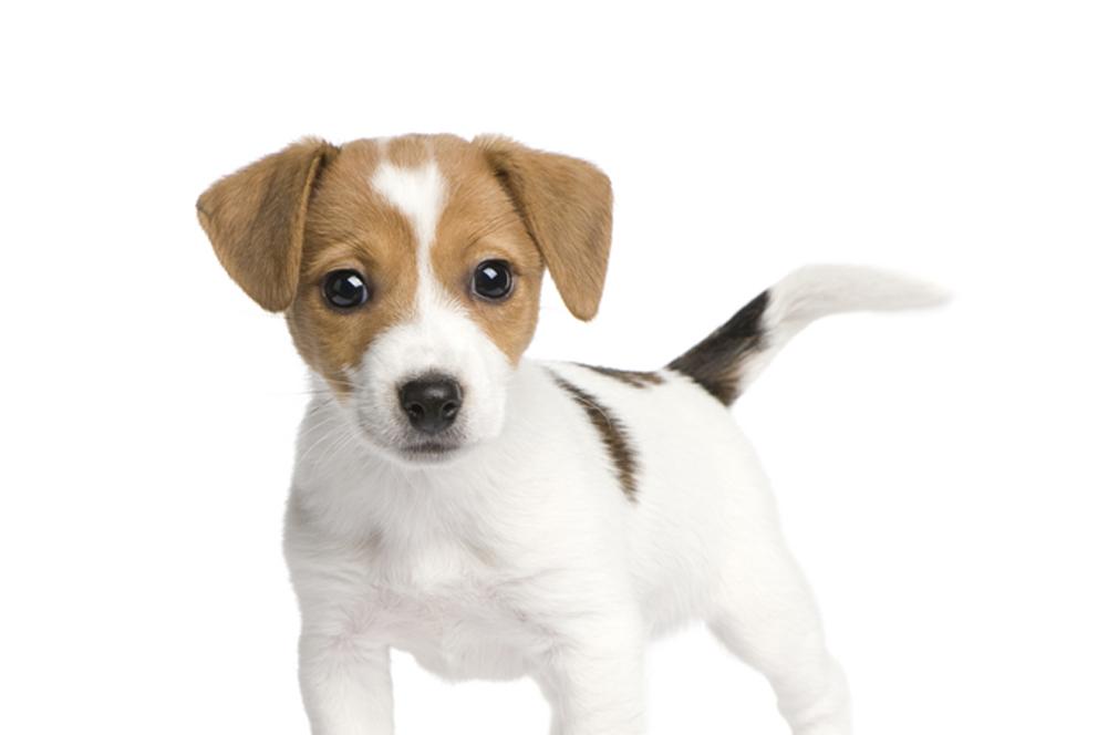 Puppy Stuif In
