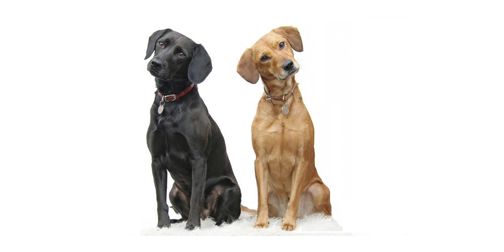 Basiscursus 'Oog voor Honden'