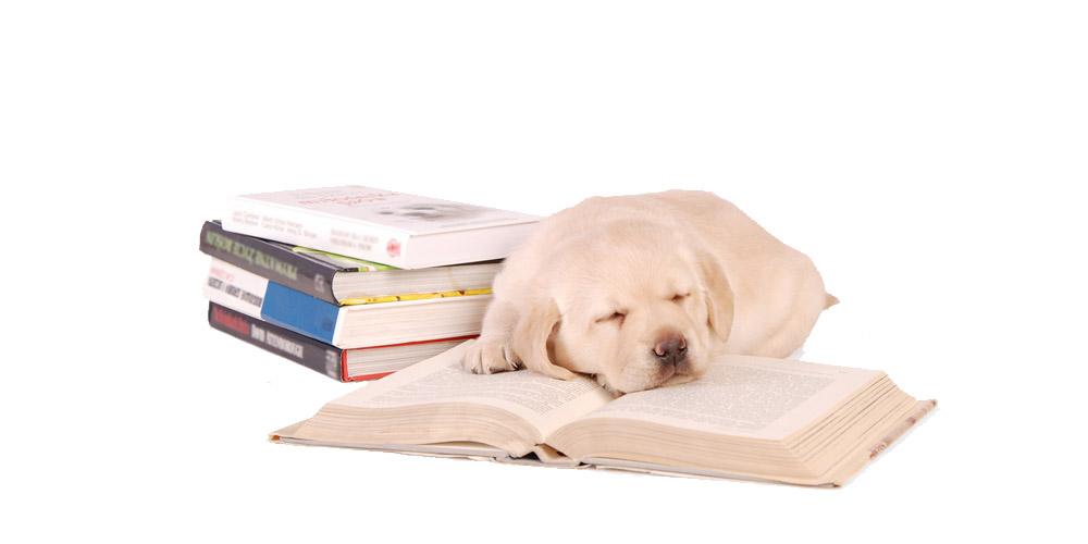 """Combi """"Puppy cursus – Basiscursus"""" – Online"""